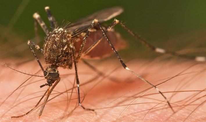 Muggen in huis