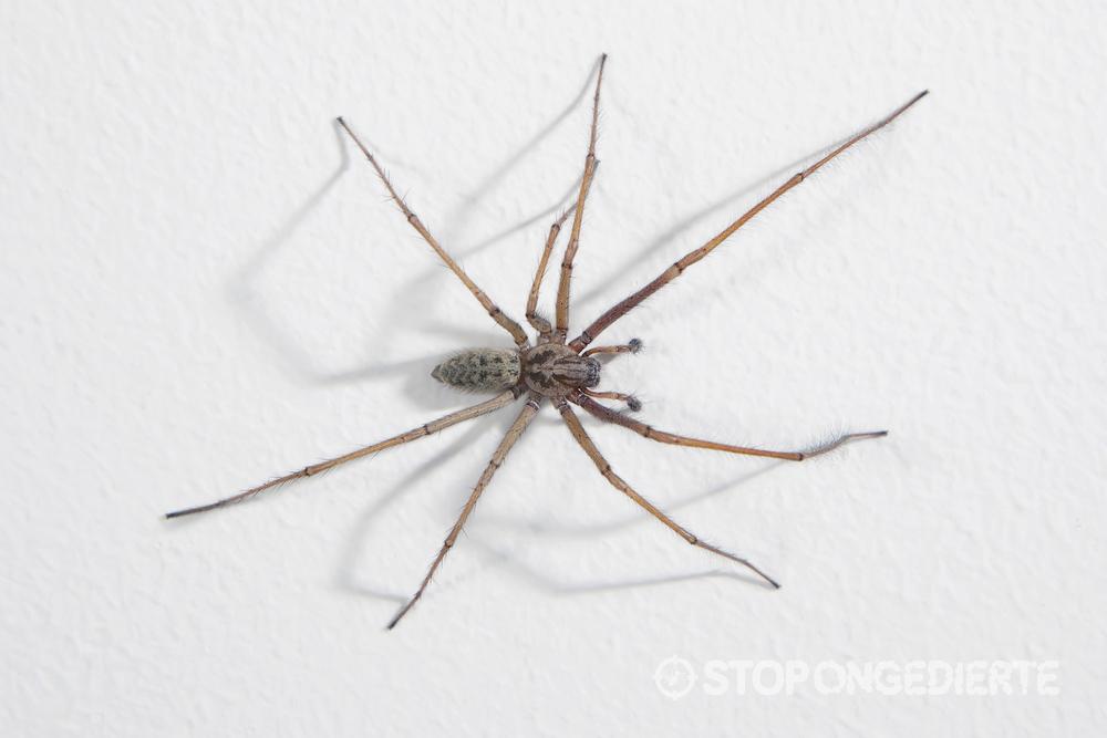 spinnen-in-huis